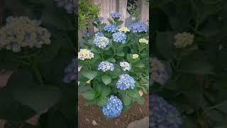 たくさんの花が咲く珍しい花ばかりの庭です(^^)