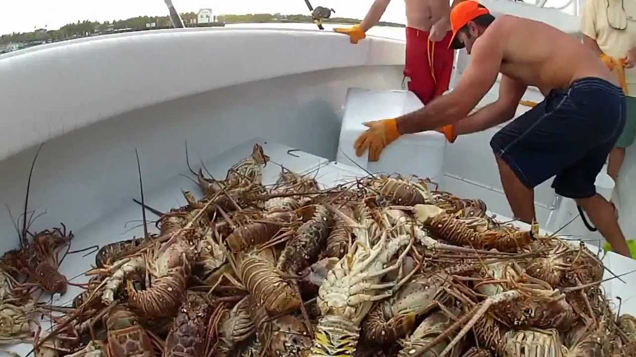 lobster in cat cay - YouTube