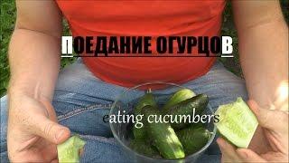 ASMR EATING FRESH CUCUMBERS / ПОЕДАНИЕ ОГУРЦОВ АСМР | ANDY GOLDRED