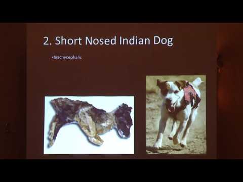Osteometric Comparisons of San Nicolas Island Dogs