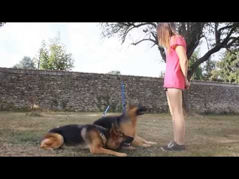 Amazing dog Tricks duo - Wouf'Lya