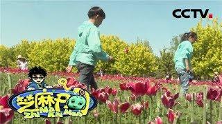 《芝麻开门》 20190520 挑战大现场 鲜花港之春暖花开|CCTV少儿