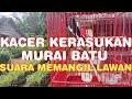 Kacer Gacor Isian Murai Kasar  Mp3 - Mp4 Download