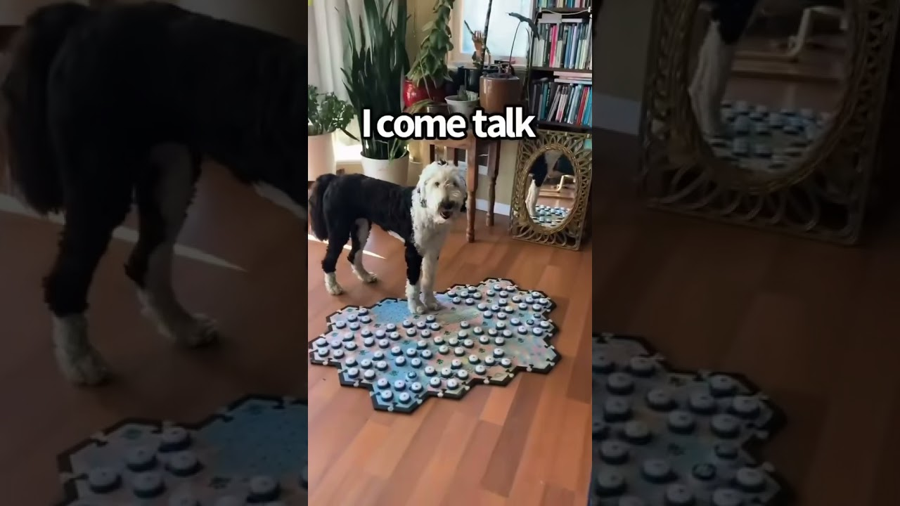 Come Talk! | My talking dog uses buttons to communicate | WhatAboutBunny