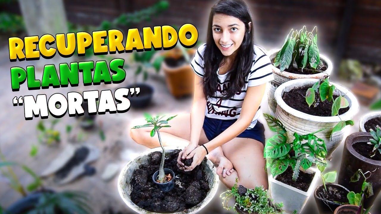 RECUPERANDO PLANTAS MORTAS