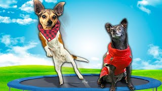 Dog's FIRST TIME on GIANT TRAMPOLINE Challenge!  (Tricks and hacks in real life for Treats)