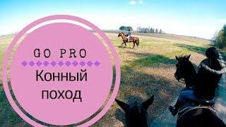 Конный поход с собакой в Беларуси весной / Horse trekking with a dog in Belarus in spring