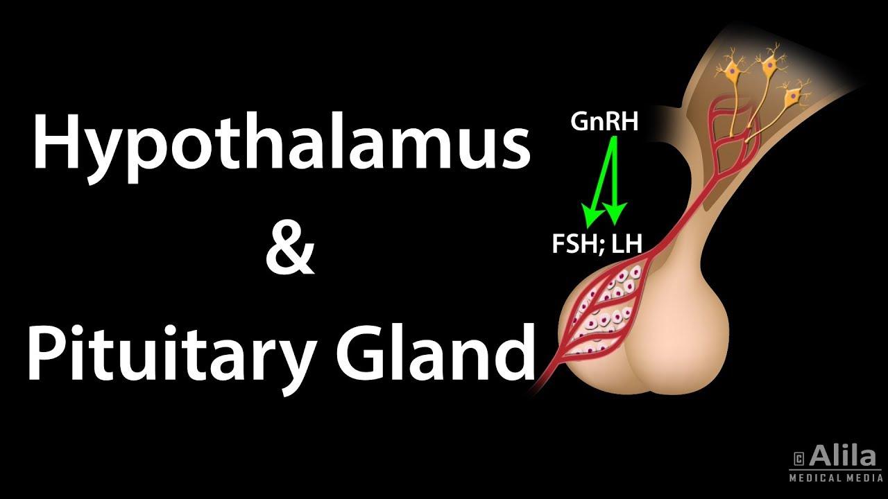 Migliori Casinò | Hypothalamus