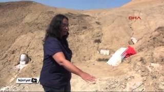 10 Tonluk Gergedan Fosili Gün Yüzüne Çıkarılıyor
