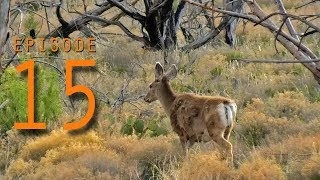 EP:15 DEER SITING OUTSIDE OF ZION NATIONAL PARK - FULL TIME TRUCK CAMPER