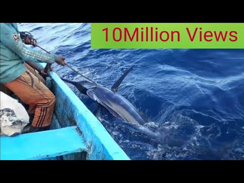 Blue Marlin Fishing Catching Fish In Indian Ocean Handline Fishing
