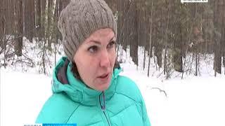 В Красноярске чёрных лесорубов пытаются поймать за руку
