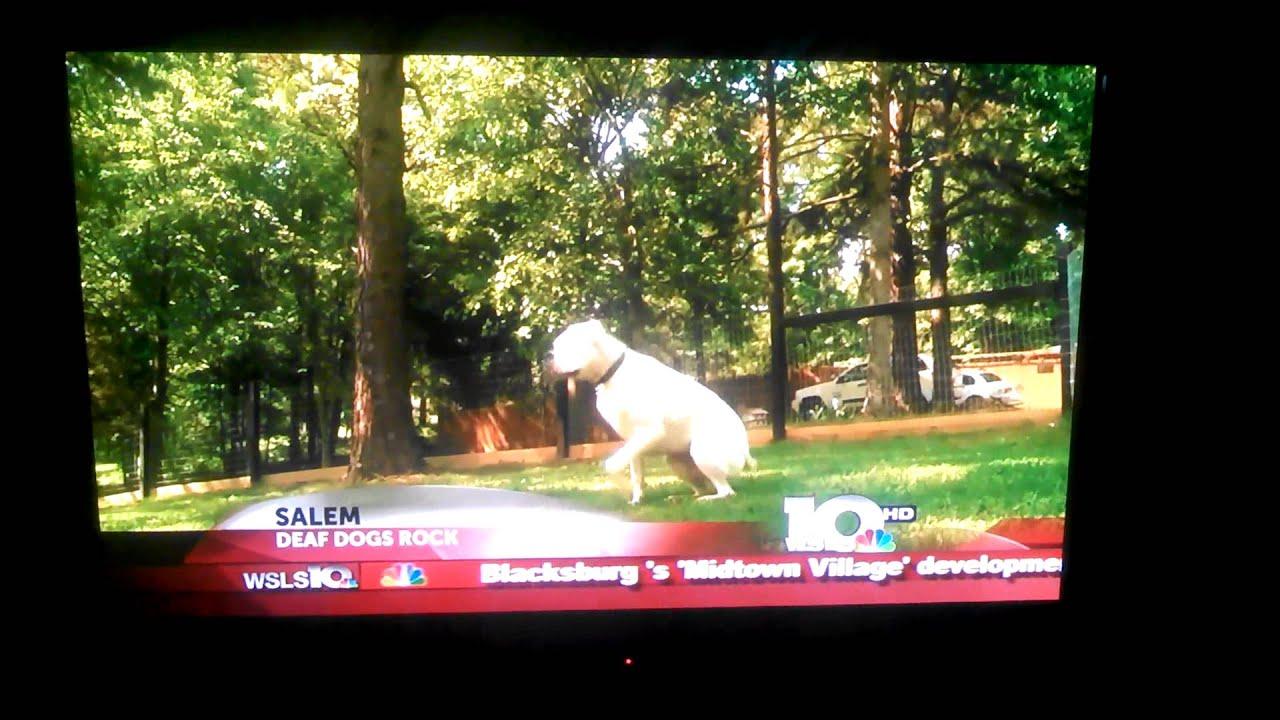 Salem woman inspired to help deaf dogs – Deaf Dogs Rock