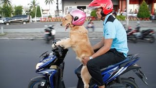Dog Rides On Scooter
