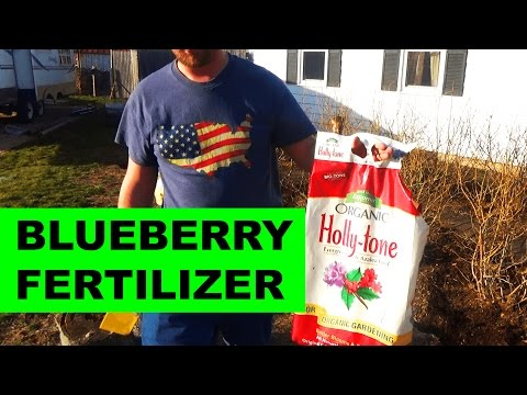 The Best Fertilizer For Blueberry Bushes