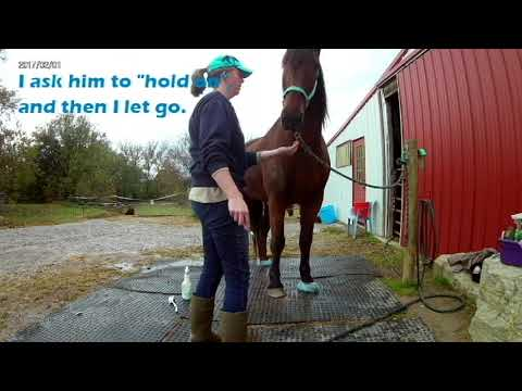 Cleaning hooves, treating thrush