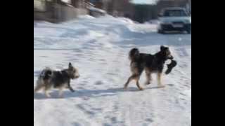 Собаки бывают кусачи
