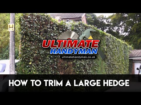 How to trim a large hedge
