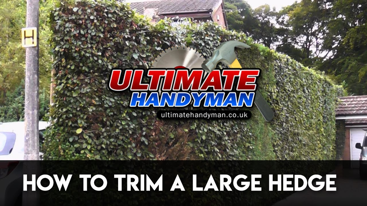 how to trim a large hedge youtube. Black Bedroom Furniture Sets. Home Design Ideas