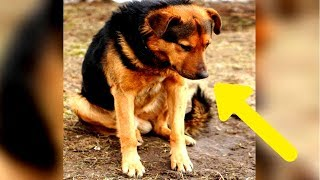 """Sein Besitzer sagte ihm """"Sitz"""" - 7 Tage später wartete dieser Hund immer noch auf seine Rückkehr"""