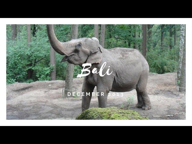 Bali 2013 ☀ Michaela Scott