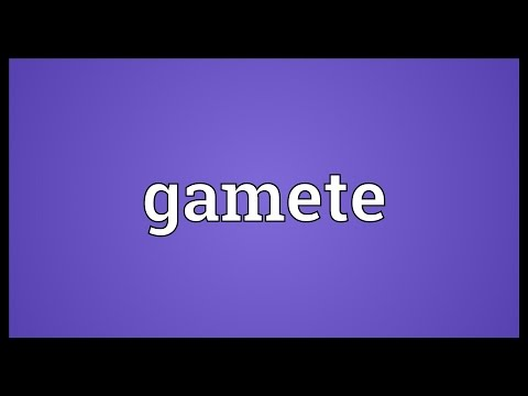 Gamete Meaning