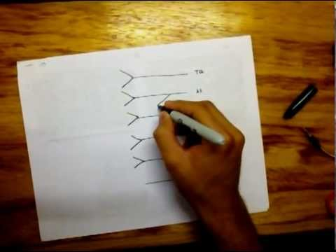 Drawing Lumbar Plexus - easy