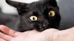 KETAHUILAH !!! 8 Arti Mimpi Digigit Kucing Menurut Primbon Jawa