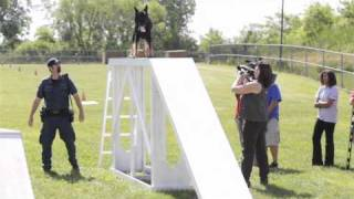 Windsor Police Dogs Put Through The Paces