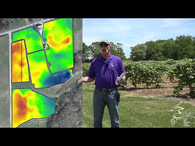 Loaner Sensors in Your Vineyard - LERGP Podcast #75