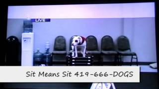 Sit Means Sit Northwest Ohio Dog Training Live On Wnwo Today Channel 24