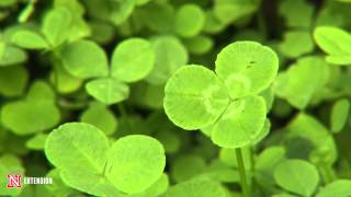 Green and Growing Tip: Clover