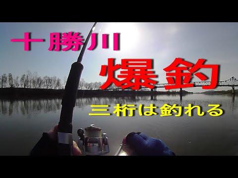 GWの釣り 十勝川で爆釣! 三桁は釣れる 北海道十勝のルアーフィッシング編