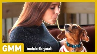 Download Lady and The Tramp Dog Trick I Teach Your Old Dog A New Trick Mp3 and Videos