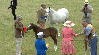 Merlod Cymreig - Eboles | Welsh Ponies - Filly Foal