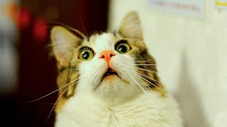 5 Cat Superstitions Around the World