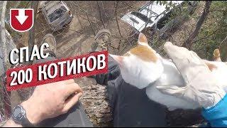 У мужчины из США очень доброе хобби — снимать застрявших животных с деревьев
