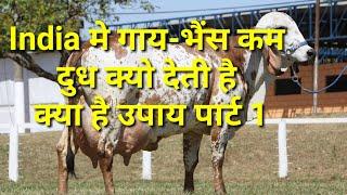 How to increase milk yield गाय भैंस के दुध को बढ़ाने के वेज्ञानिक उपाय पार्ट 1