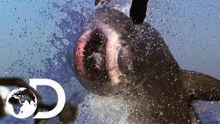 The Most Epic Shark Week Moments! | Shark Week's 50 Best Bites | SHARK WEEK 2018