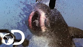 The Most Epic Shąrk Week Moments! | Shark Week's 50 Best Bites | SHARK WEEK 2018