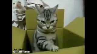 Коты, коробочки и коробки.