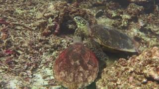 Turtles messing around!!!