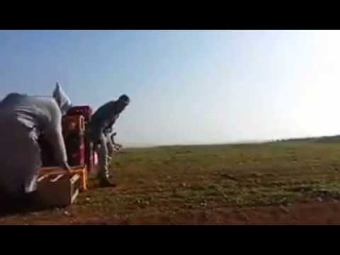 الاجنحة الذهبية للحمام زجل في مدينة اليوسفية   youssoufia city _Homing pigeon _Morocco_