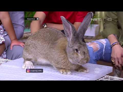 Kelinci Besar Ini Bikin Kaget Andre dan Hesti