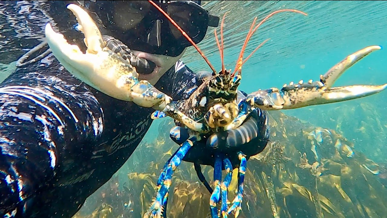 Coastal Foraging/Exploring and Diving - Amazing Underwater footage and Autumn Lobster Beach Cook