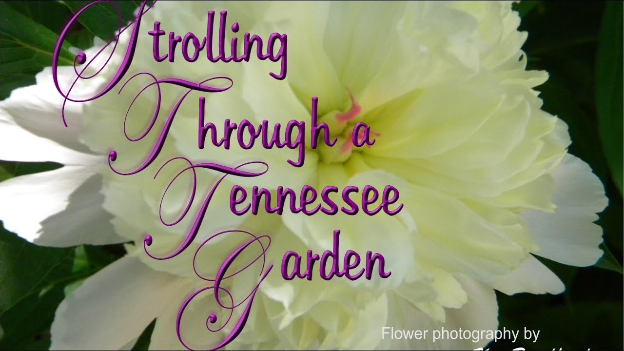 tennessee flower garden 2017 - youtube