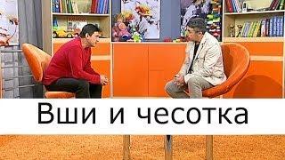 Вши и чесотка -  Школа доктора Комаровского
