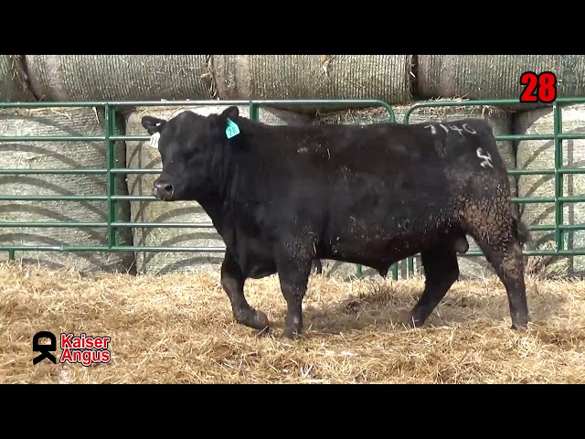 Kaiser Angus Ranch Lot 28