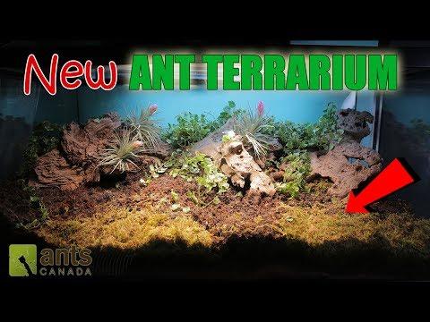 Amazing New Ant Terrarium