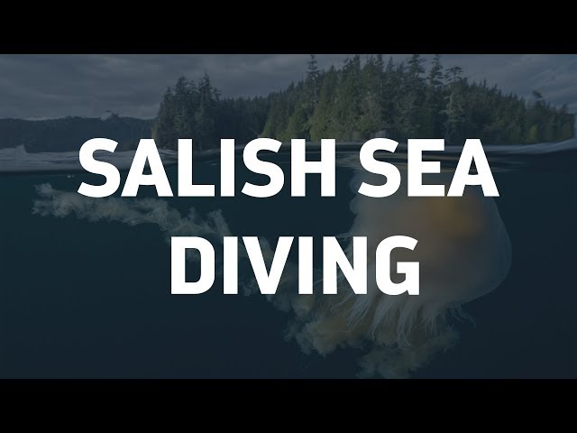 Underwater footage of the Salish Sea